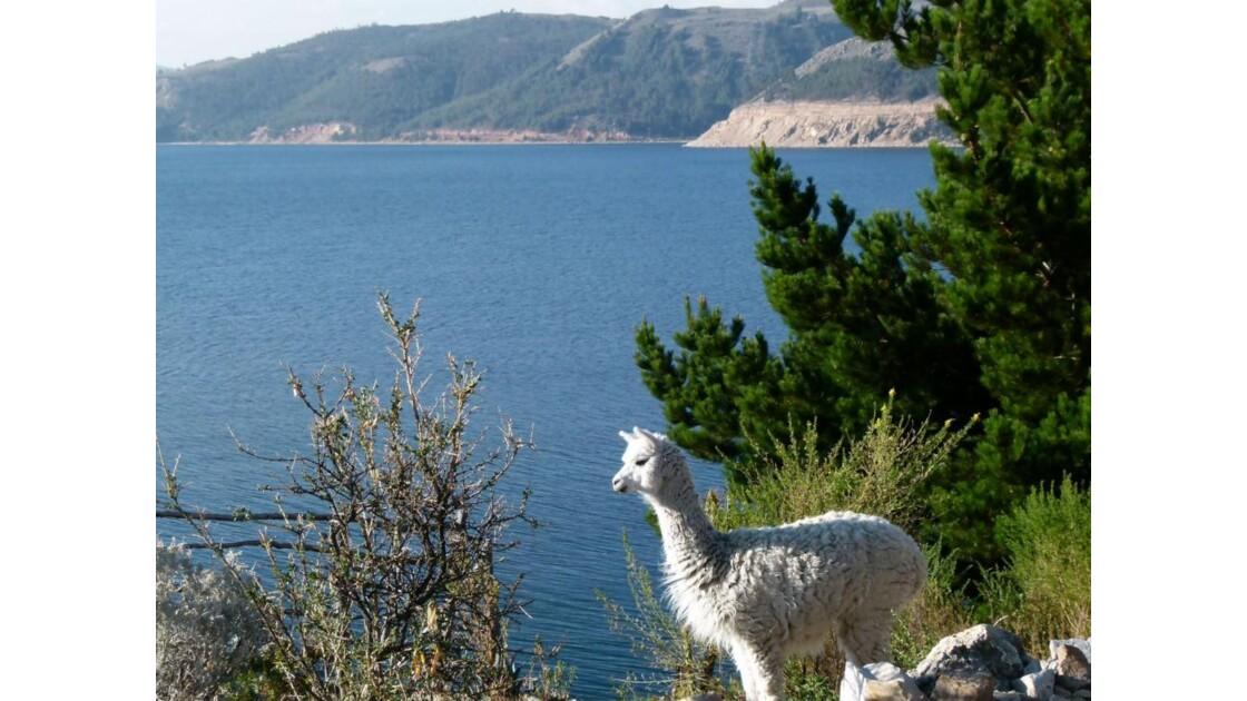 Lac Titicaca depuis Suasi