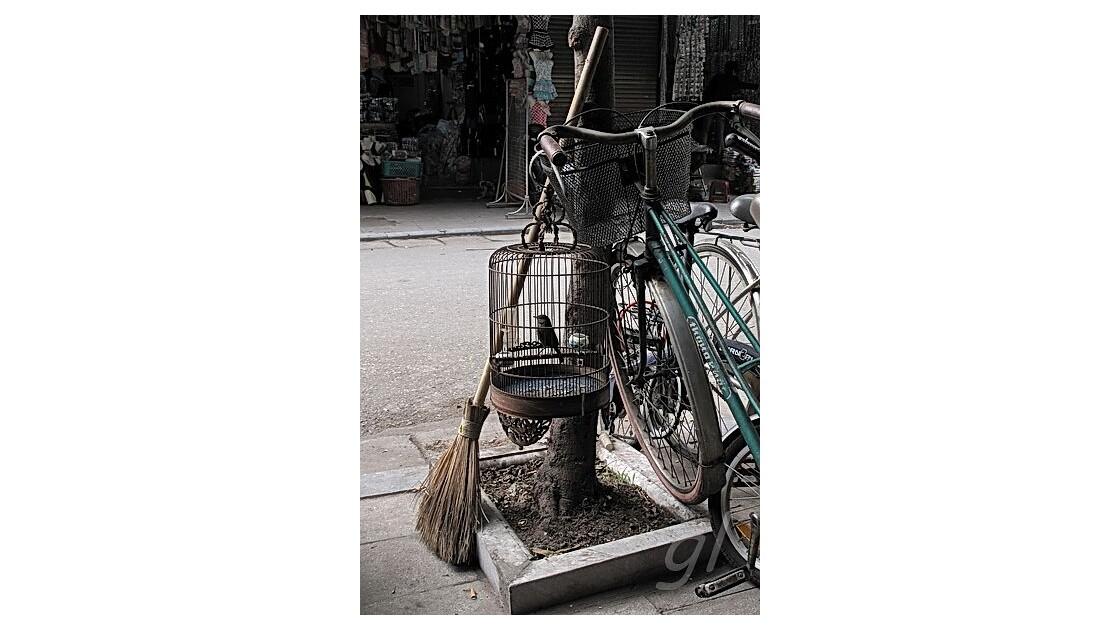 Hanoï - oiseau chanteur, balai et vélo