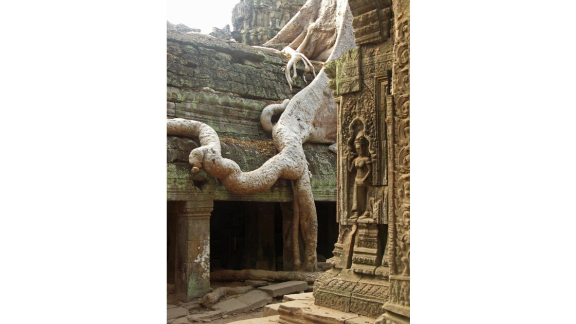 Temple du Ta Prohm