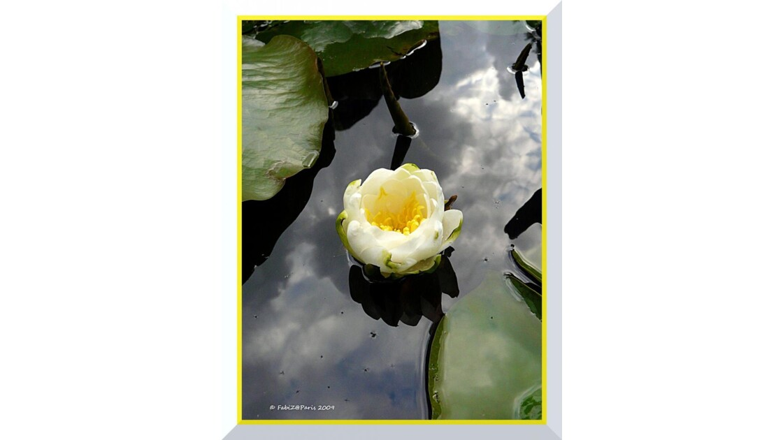 White Water Lily - Parc de Bercy
