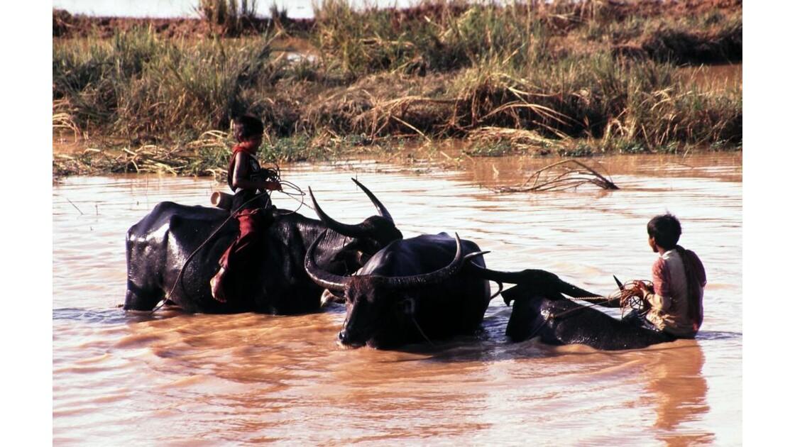 Cambodge jeunes gardiens de buffles2