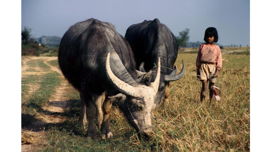 Cambodge petite gardienne de buffles