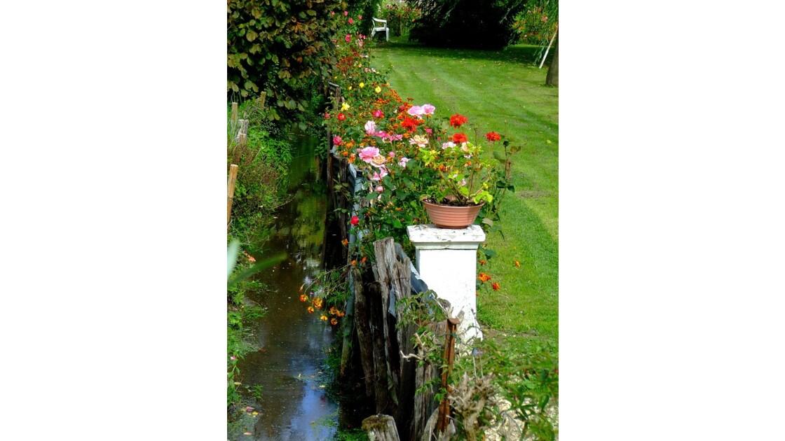 Marais fleurs