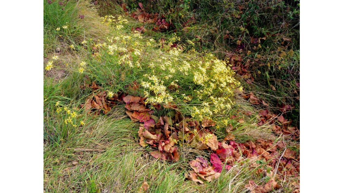 Fleurs et feuilles mortes