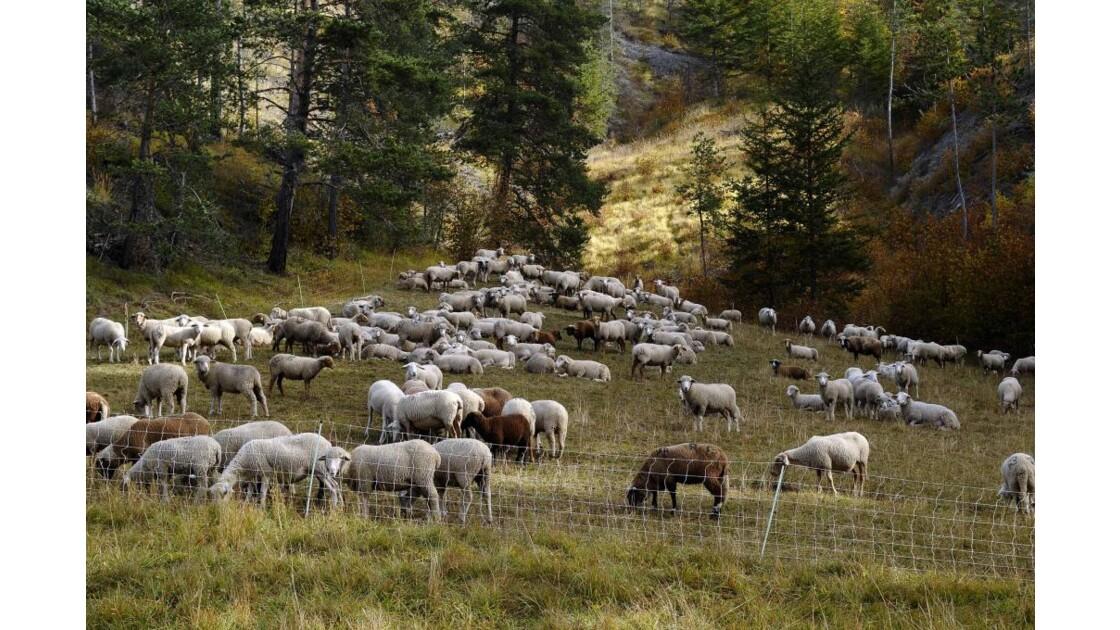 Pastoralisme dans le Col du Labouret