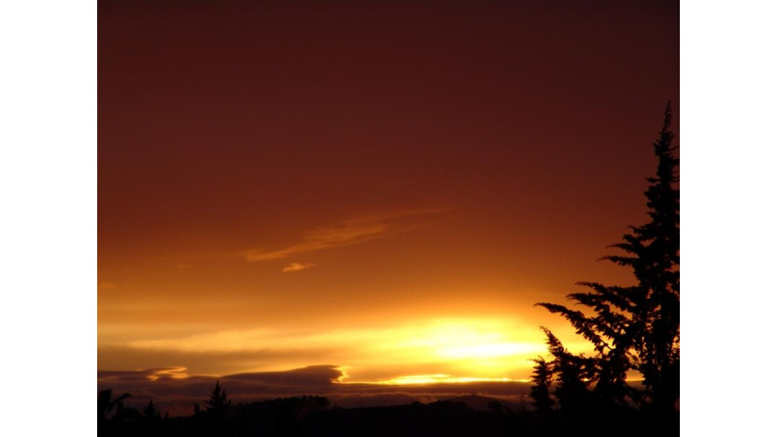 """The Sun and the Tree"" Dracénie.JPG"