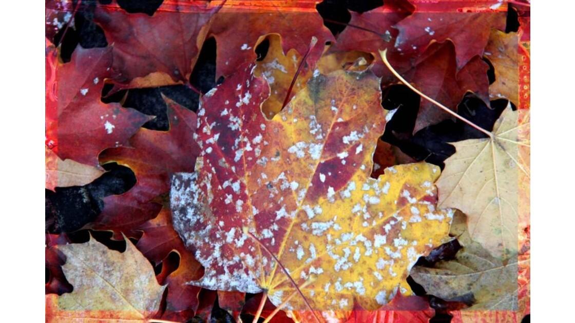 Les feuilles mortes se ramassent...
