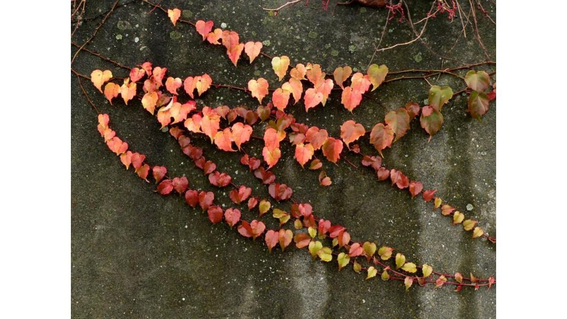 Chapelet de feuilles