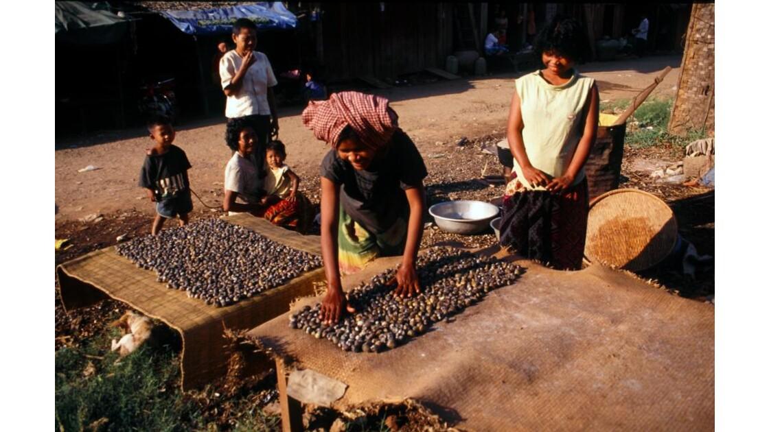 Cambodge séchage de coquillages.