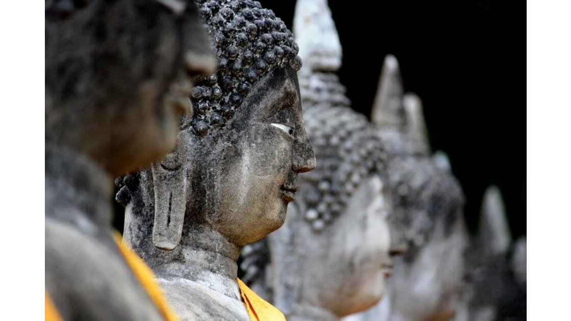Staring Buddhas...