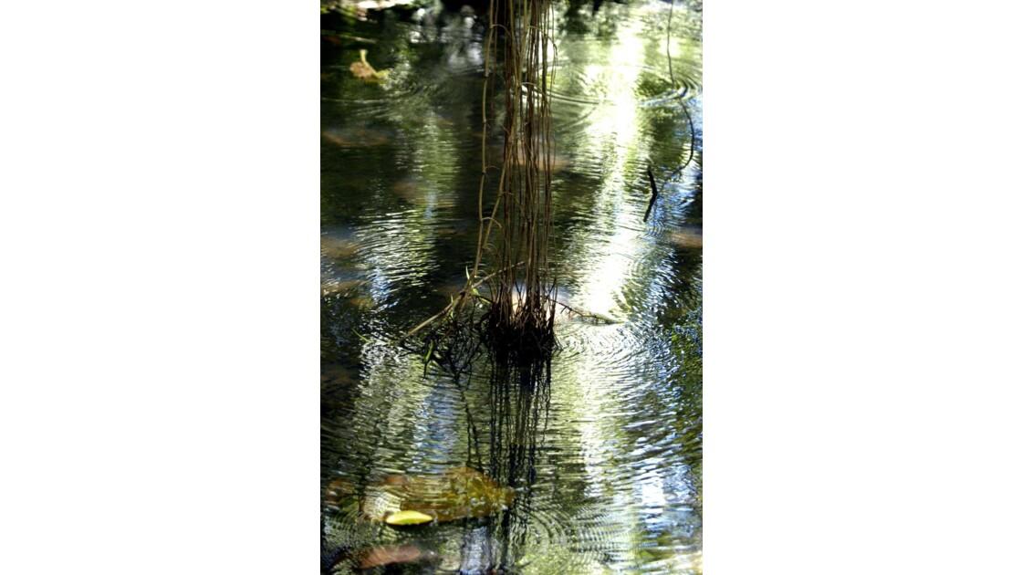 Aquarelle liane et ronds dans l'eau