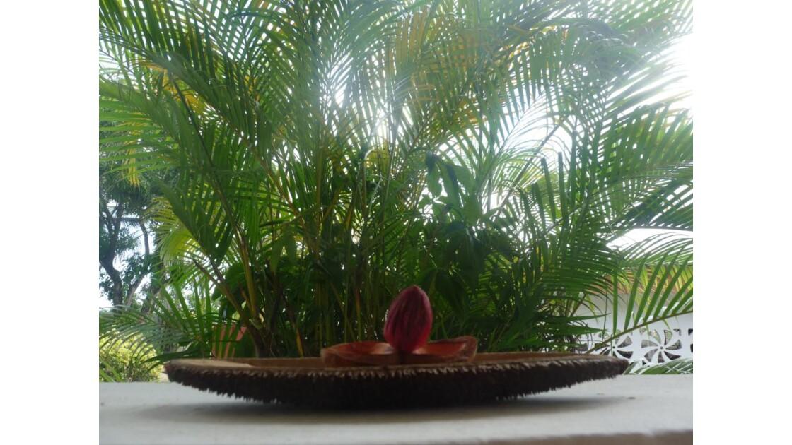 graines de Guyane