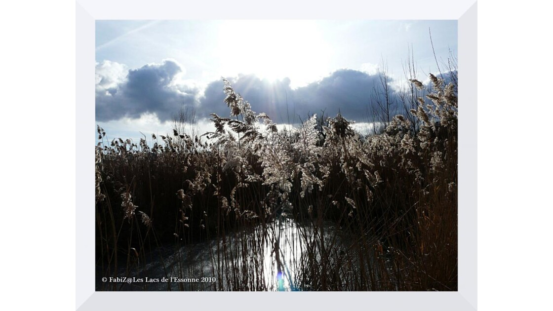 A Thinking Reed under Sunlight