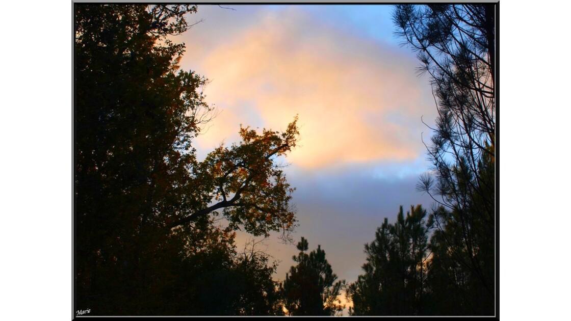 Coucher de soleil en forêt_PB282137