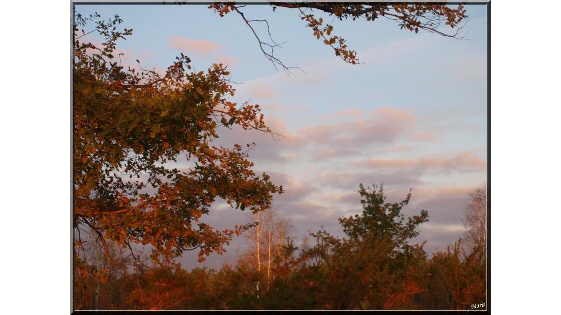 Soleil couchant sur la forêt_PB282146
