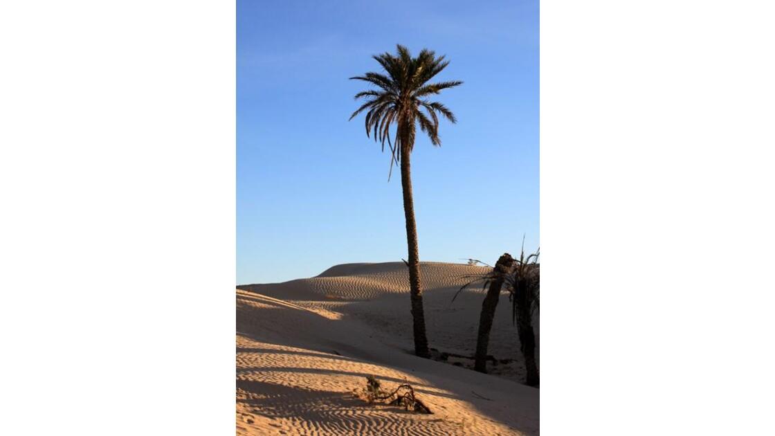 sur la dune ...
