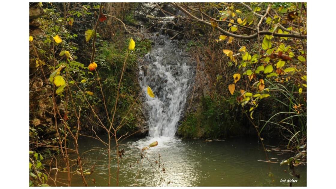 cascade en sous bois