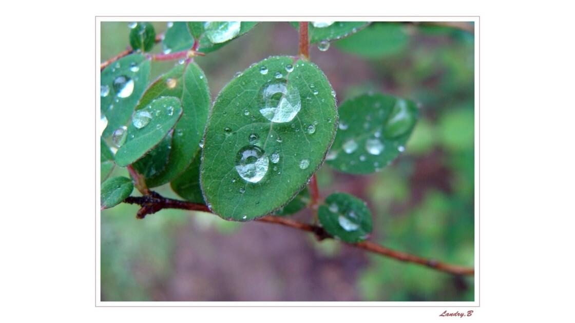 Perle de pluie