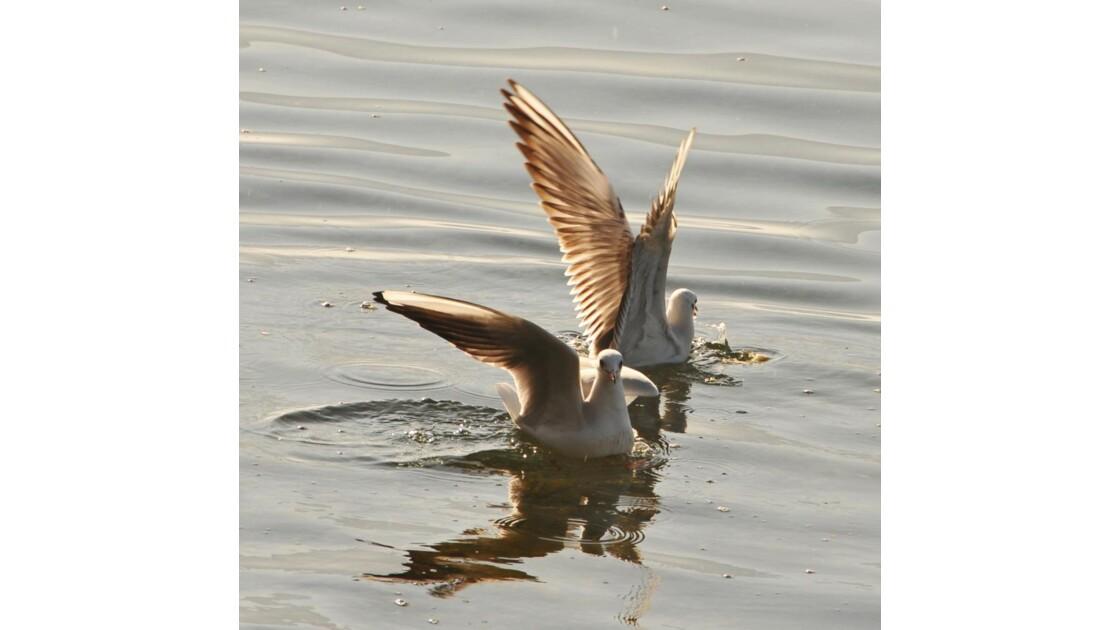 chorégraphie avec ailes (elles)
