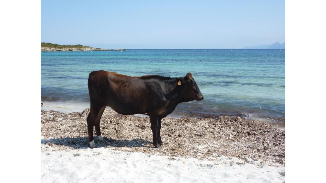 .Désert des Agriates (Corse)
