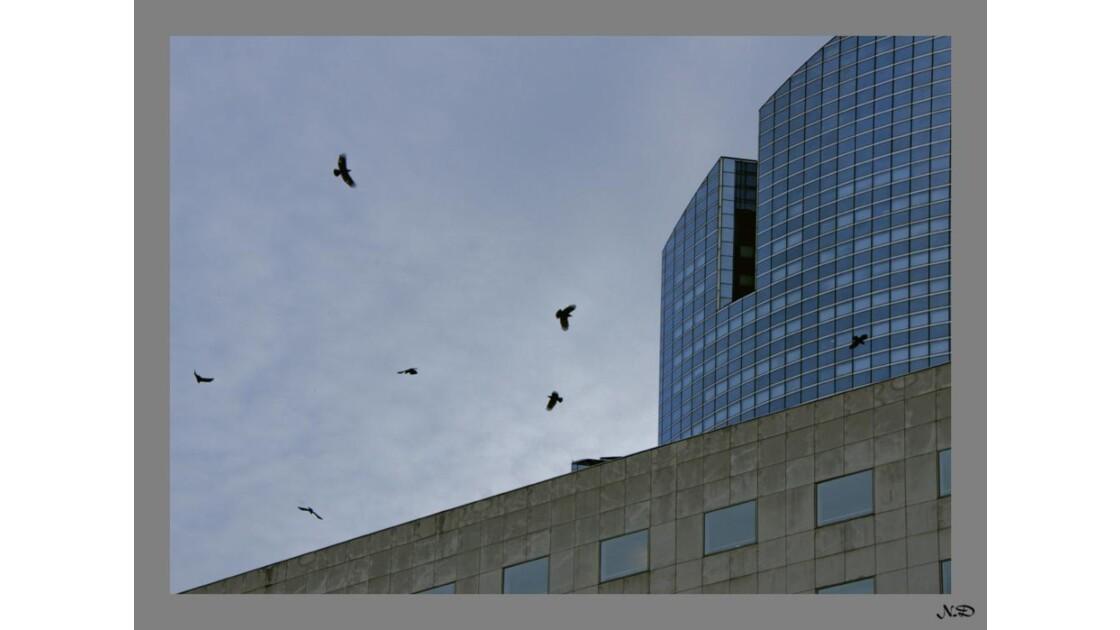 Les corbeaux !!
