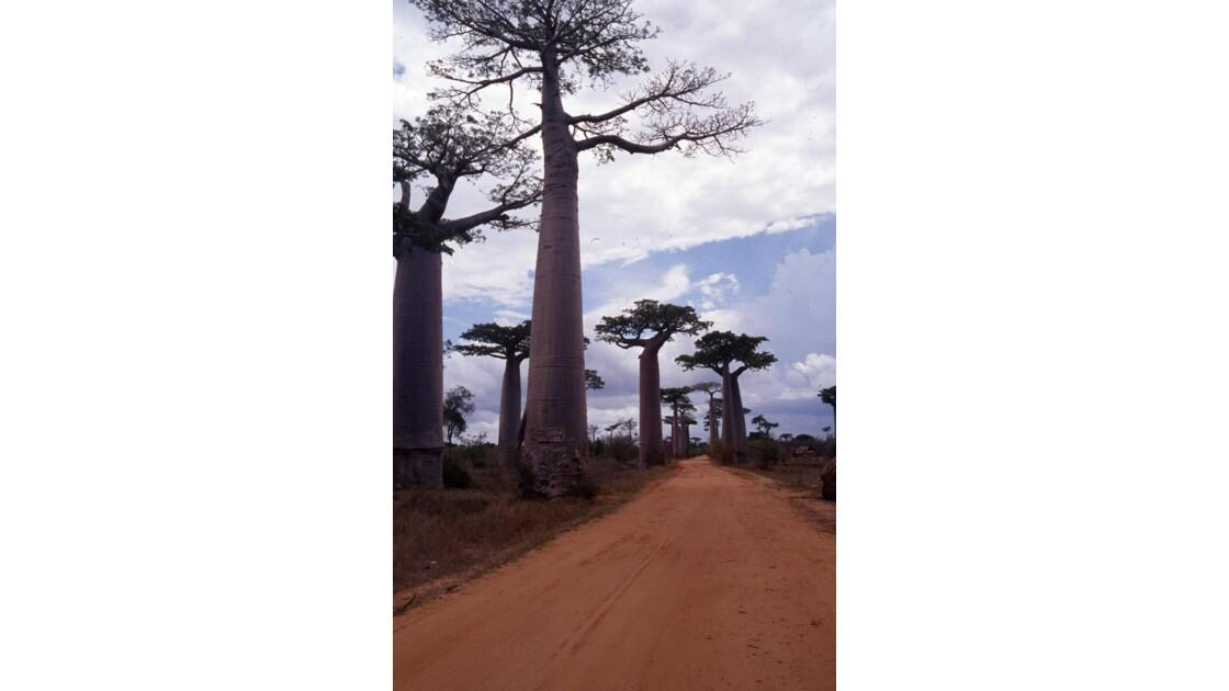 Allée des Baobab Morandave Madagascar