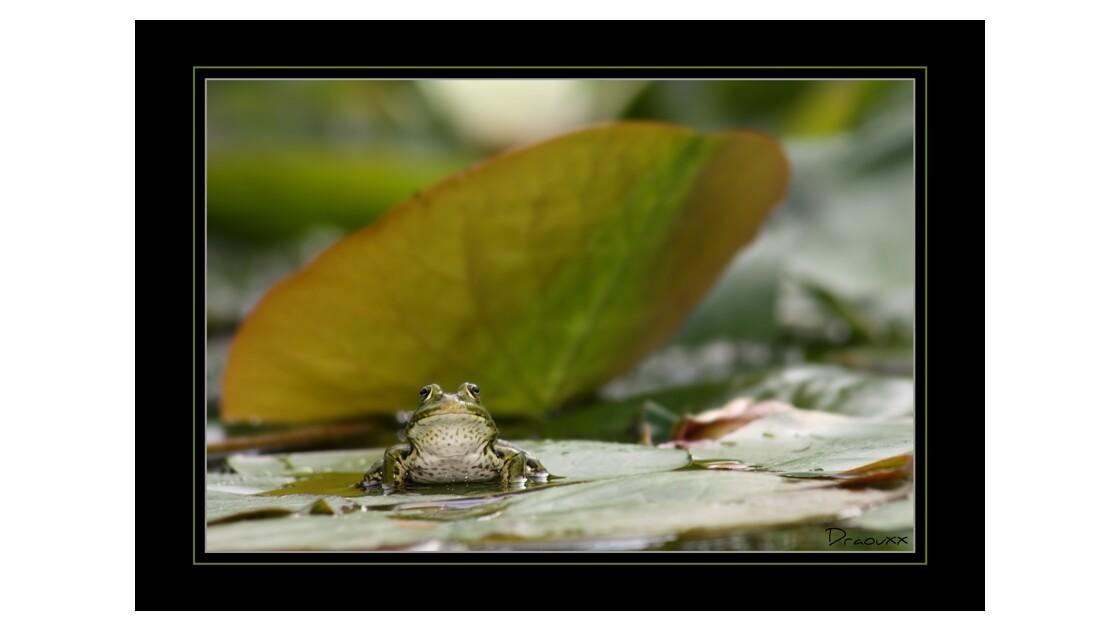 grenouille_01.jpg