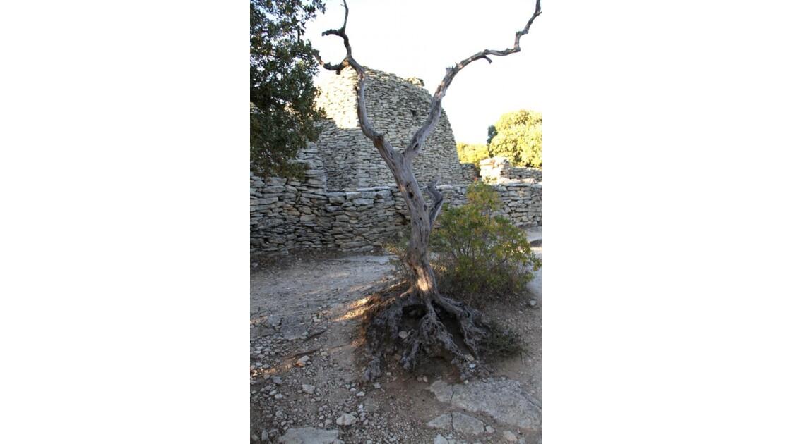 """Village des Bories : arbre mort  ..."""
