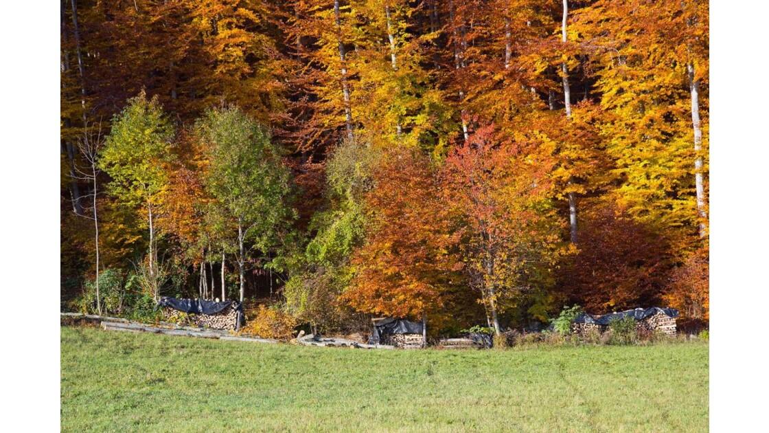 Champsaur automne, réserve de bois