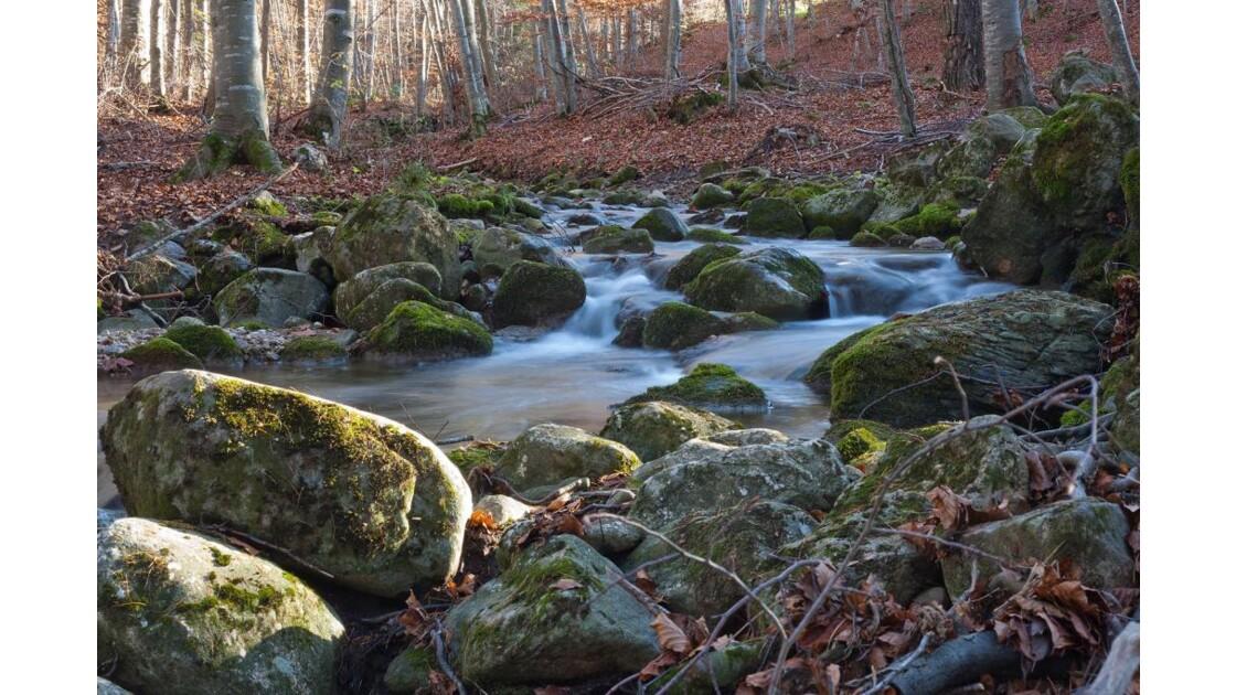 Cours d'eau à l'automne