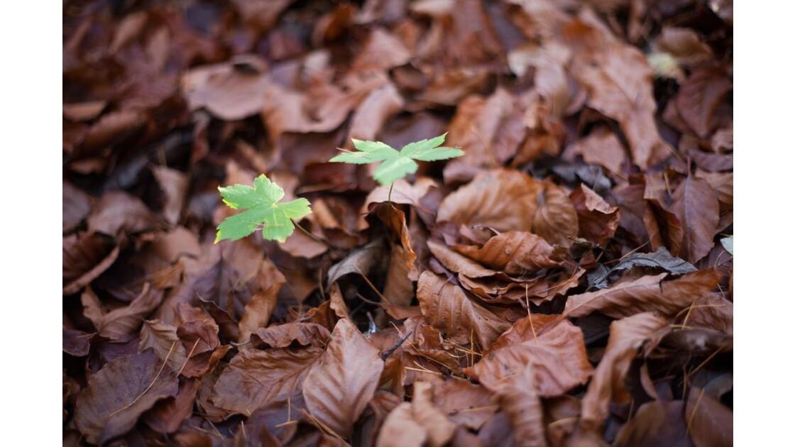 végétation à l'automne