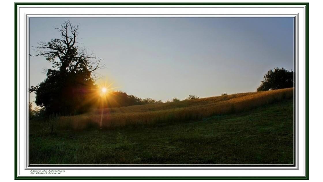 Soleil levant sur les blés ( Isère )