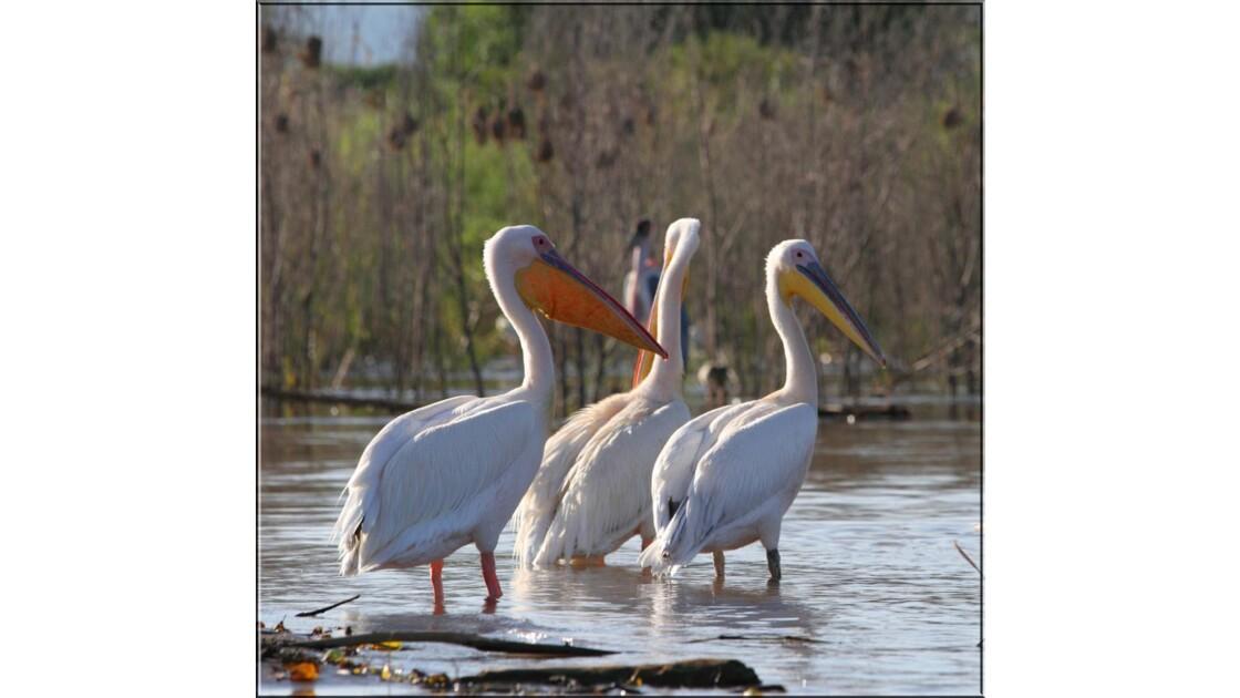 Oiseaux sur le lac Chamo