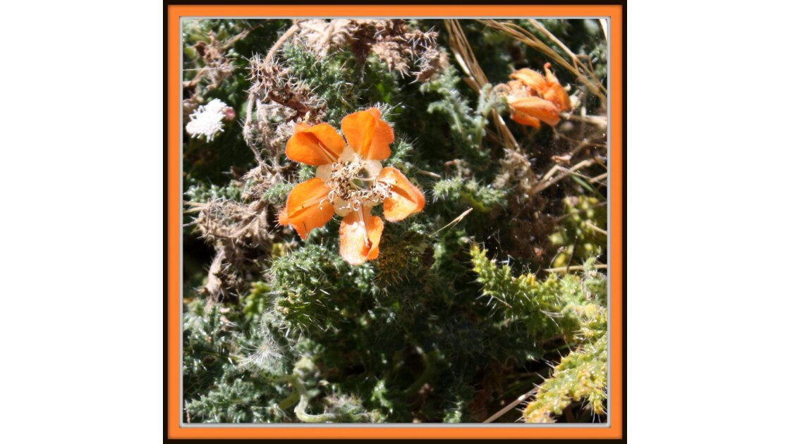 fleurs sur île de Taquile