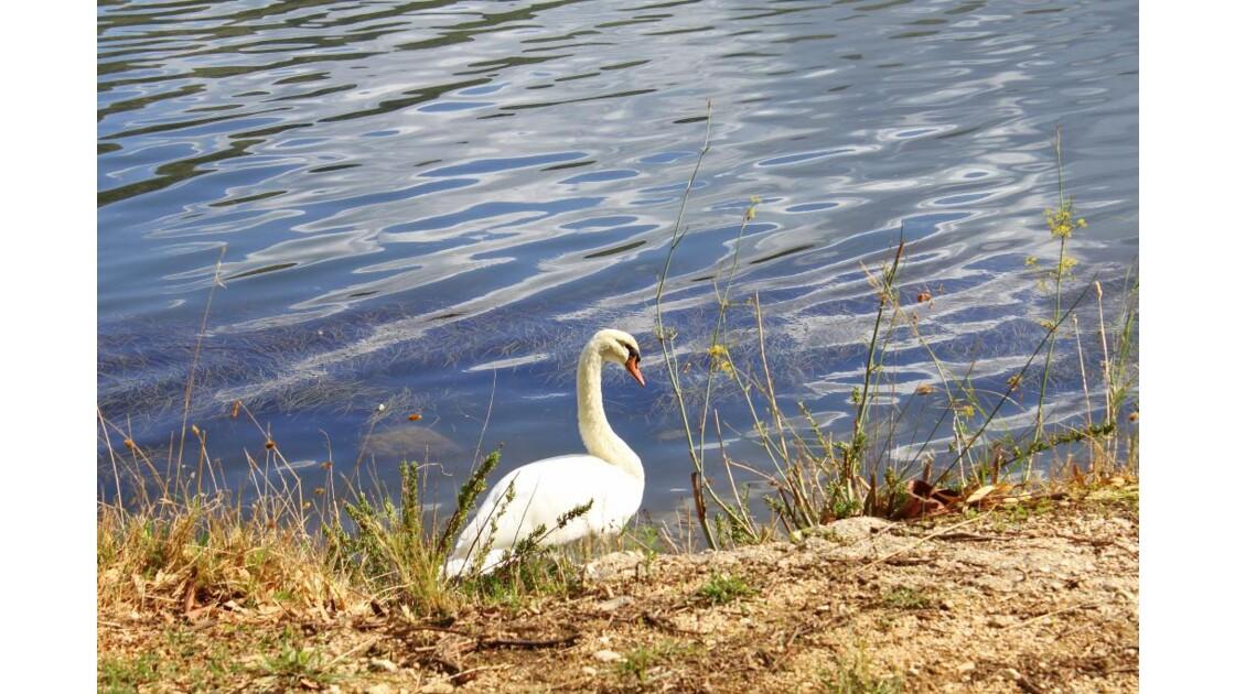 Le long du lac