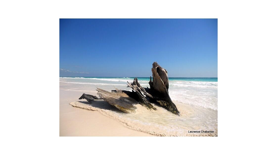 plage_bois_flott_Tulum Quintana Roo