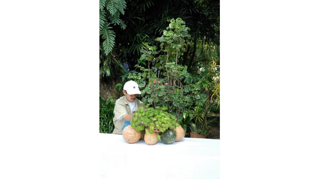 Cali jardin 2