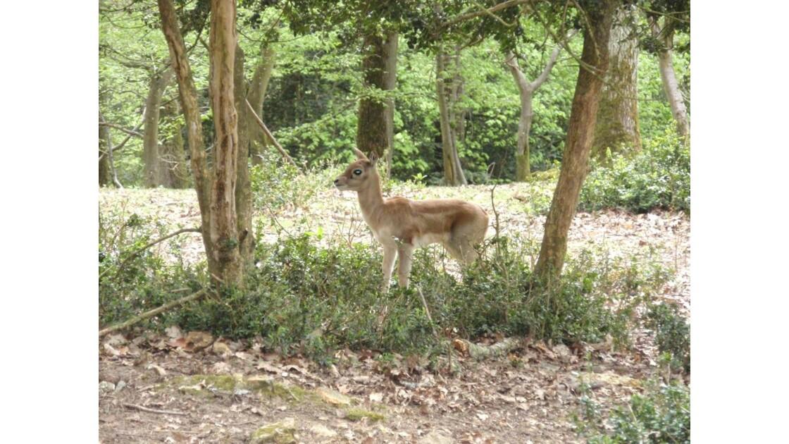 Un autre esprit de la forêt