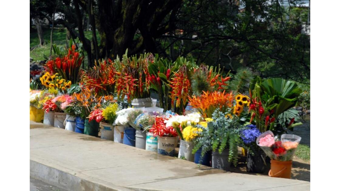 Cali marché aux fleurs sur le trottoir