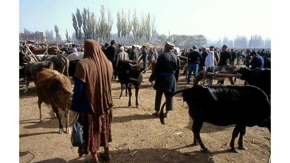 coin des vaches