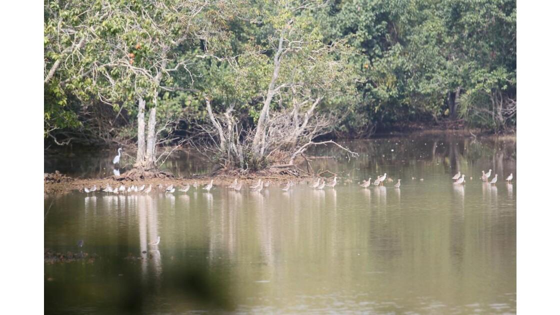 Lac d'oiseaux