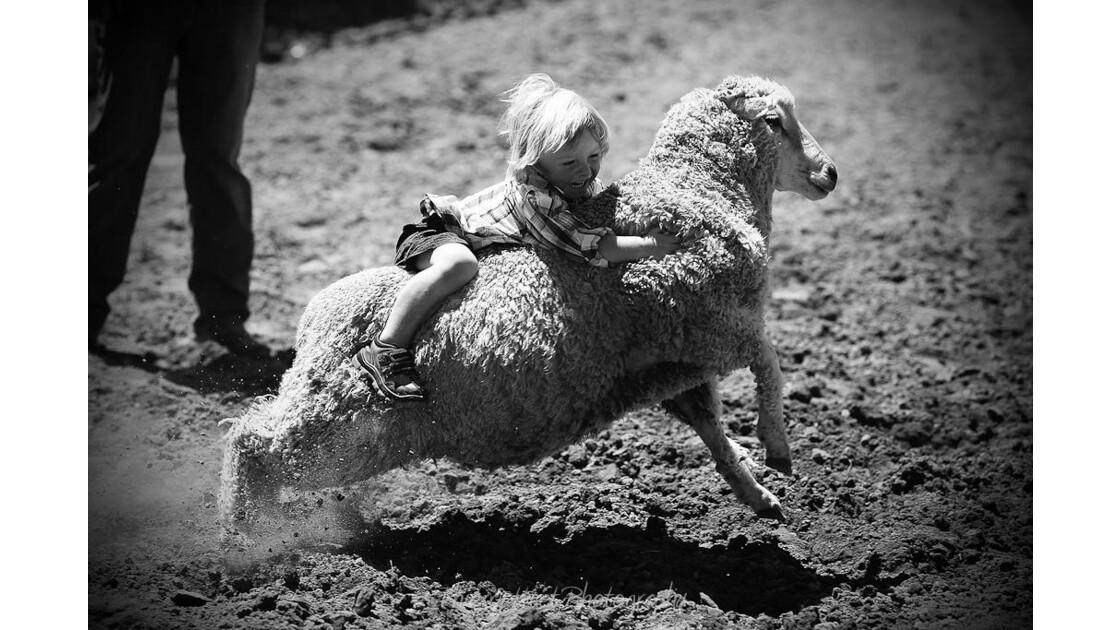 SHEEP RIDE