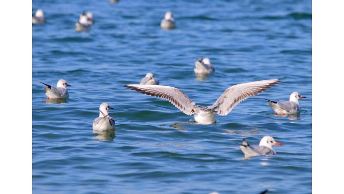 Les oiseaux..