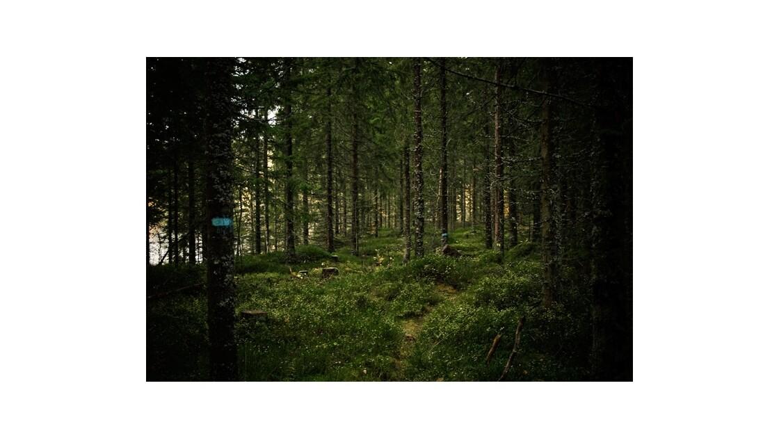 Le chemin Bleu, dans la Nordmarka