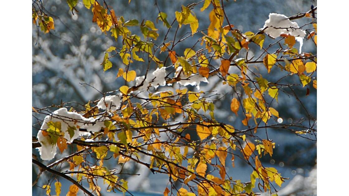 L'automne en blanc