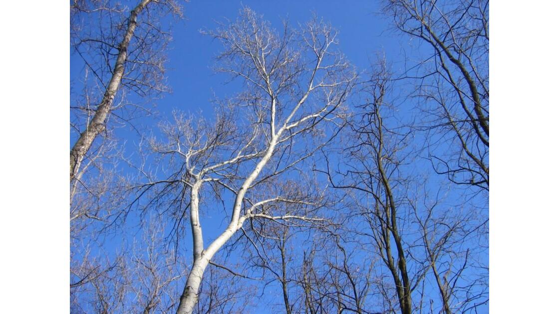 le soleil sur la branche.