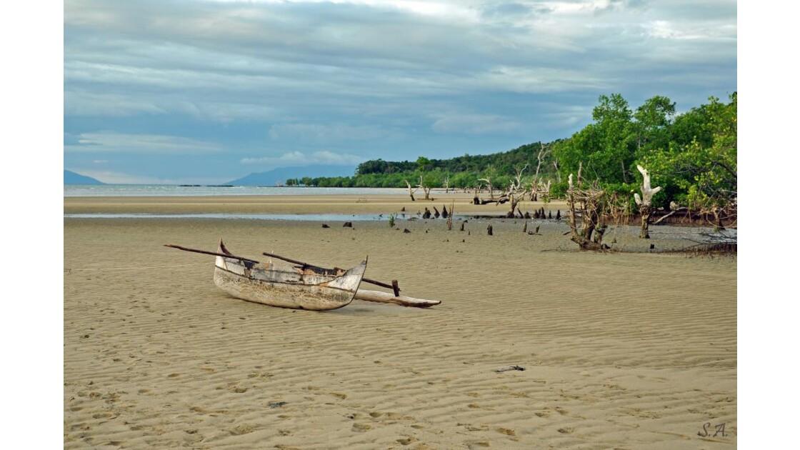 Pirogue et mangrove 2