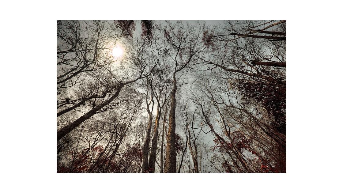 Forêt dans le nord de la Thaïlande