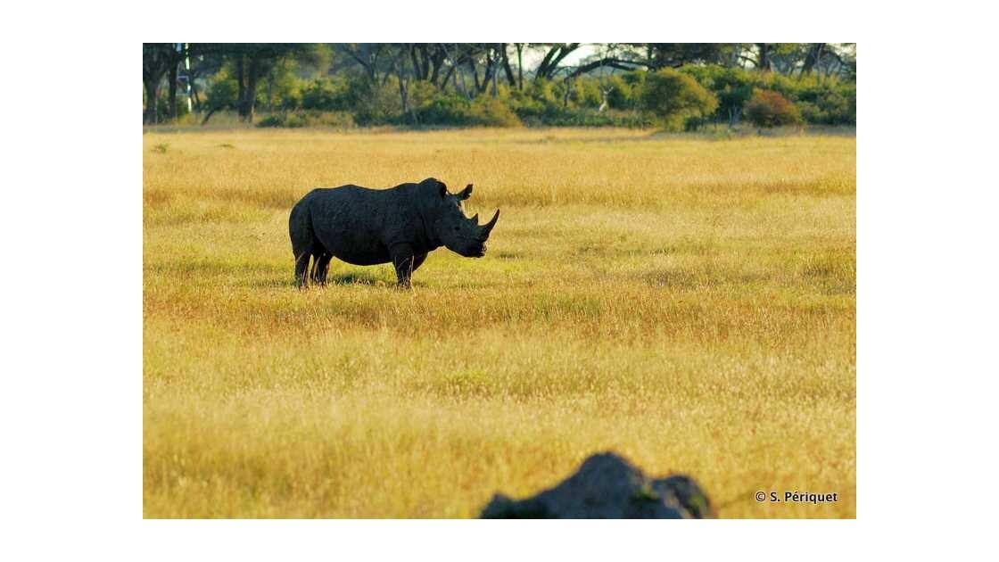 Rhino blanc à Kennedy