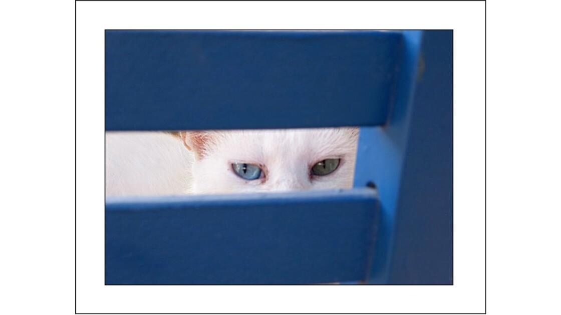yeux de chat grec